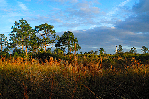 View from the trail at Buck Lake Conservation Area, West of Titusville, Florida